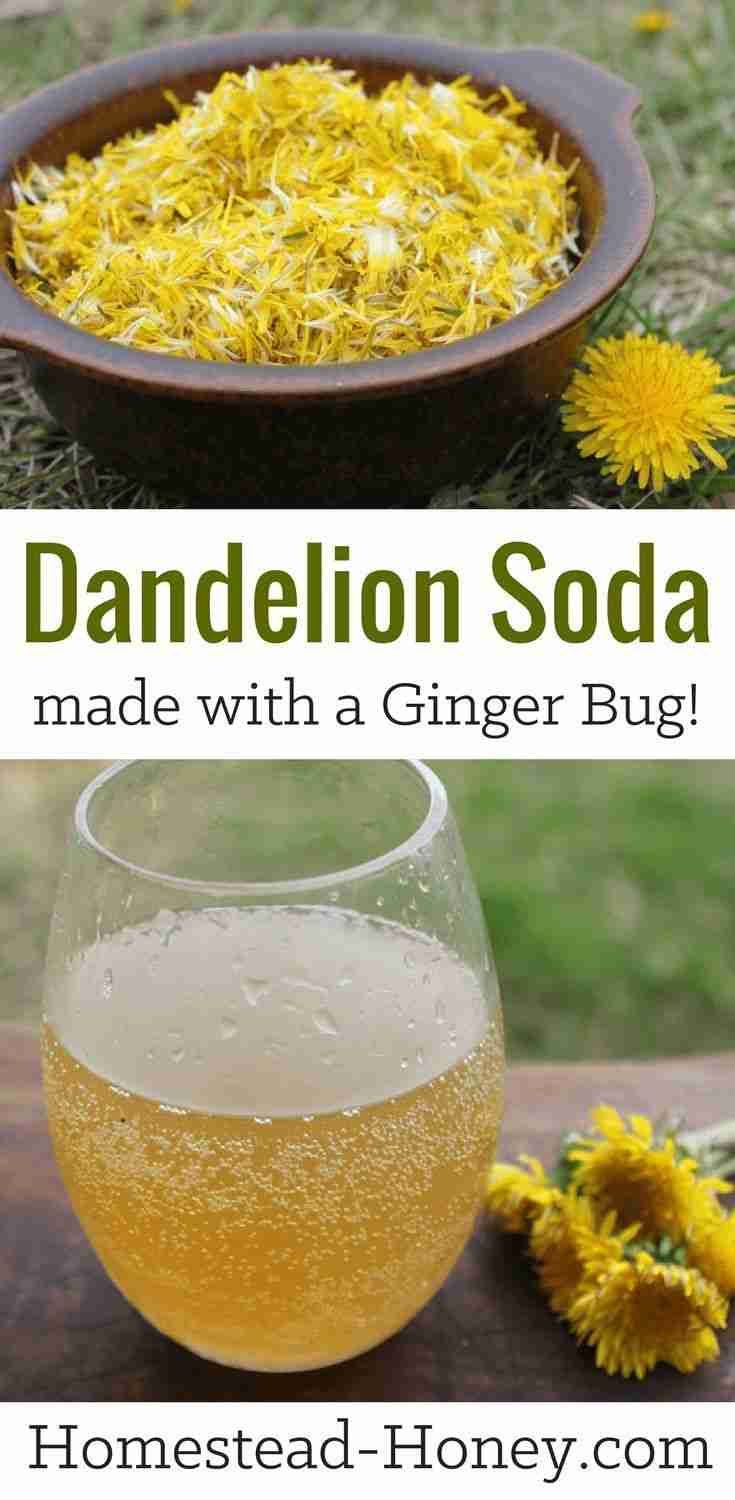 Dandelion Soda Recipe (Naturally Fermented with a Ginger Bug)