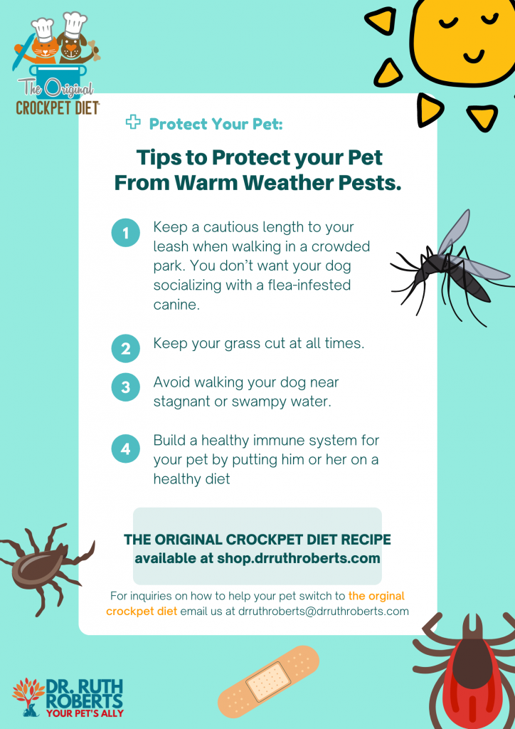 Protect your pets from warm weather pest by boosting their immune system